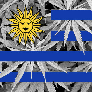 Les Uruguayens pourront acheter de la marijuana en pharmacie en 2016