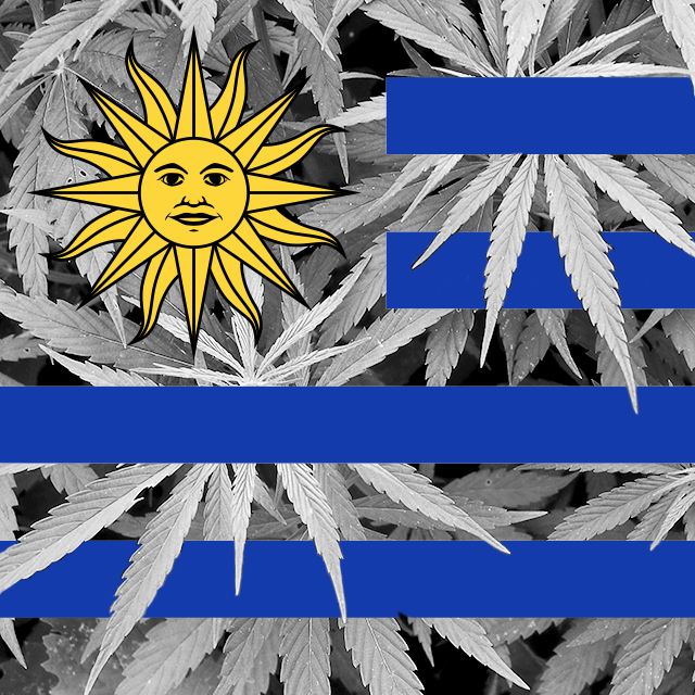Cannabis available in pharmacies in Uruguay in 2016