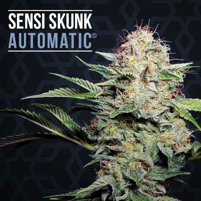 Sensi skunk automatic de sensi seeds for Skunk interieur