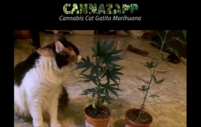 CannaZapp #9: cannabis and pets