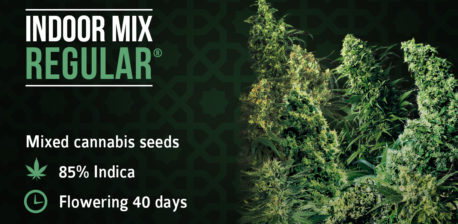 Indoor Mix Sensi Seeds