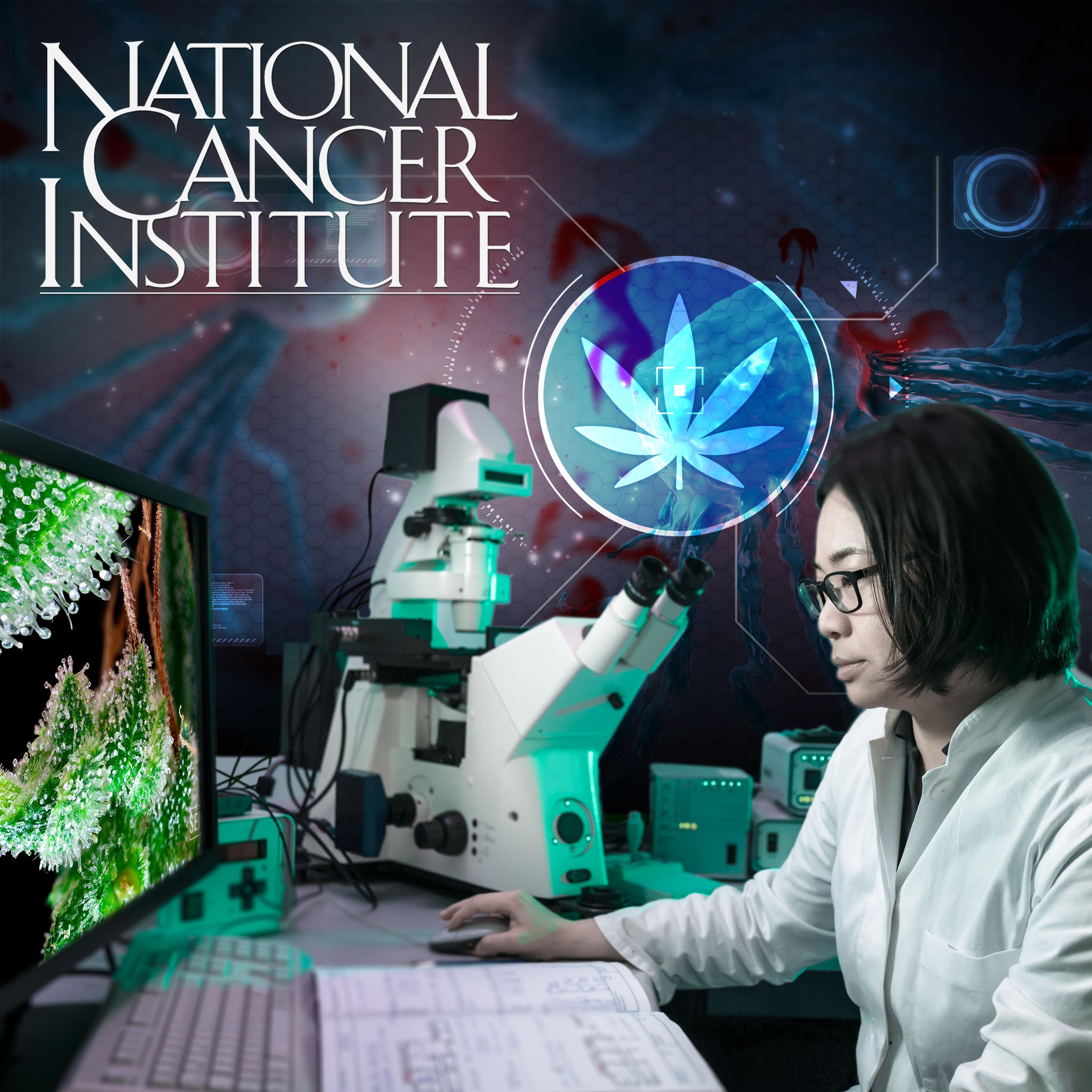 Cannabis Tötet Krebszellen