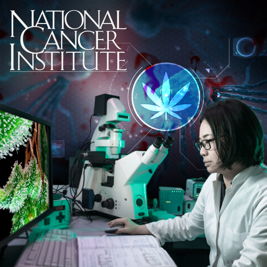 Amerikaanse National Cancer Institute: Cannabis doodt kankercellen