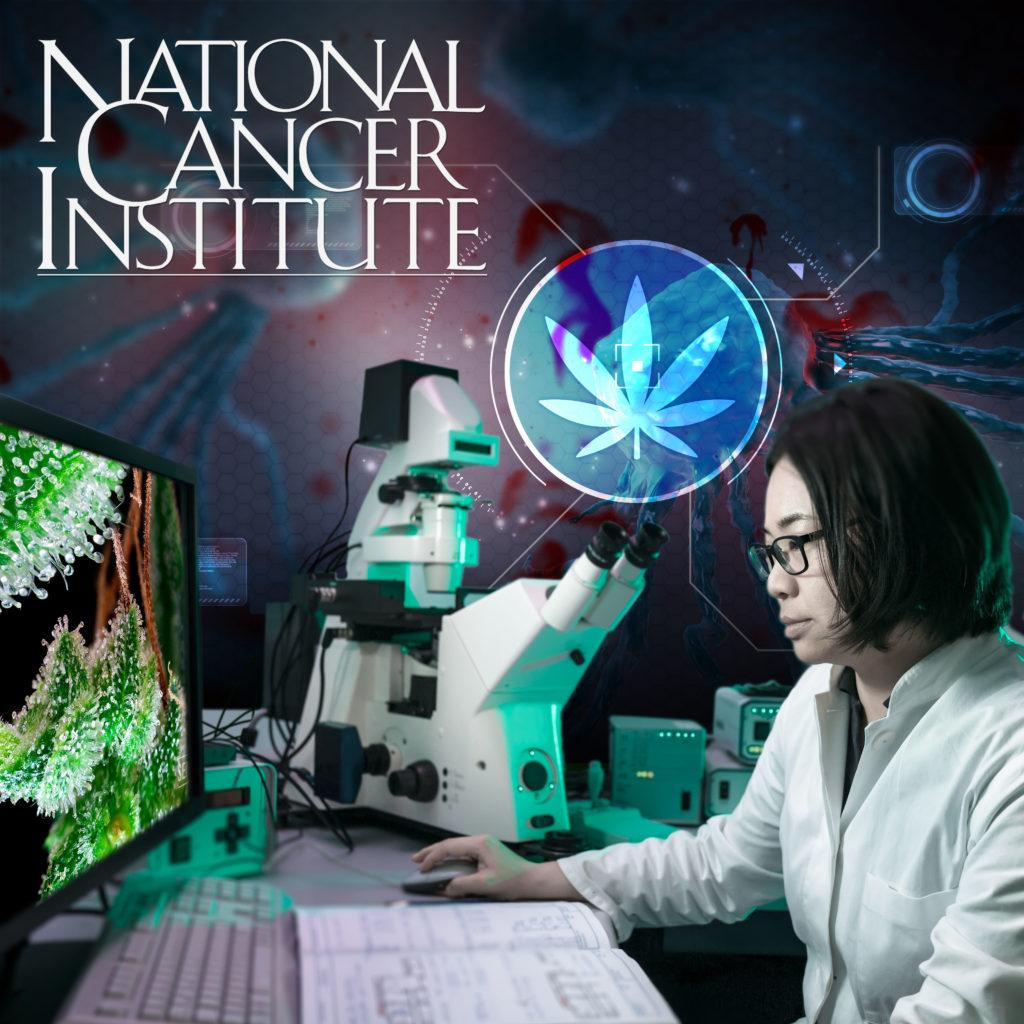 Instituto Nacional del Cáncer de Estados Unidos: El cannabis mata las células cancerosas
