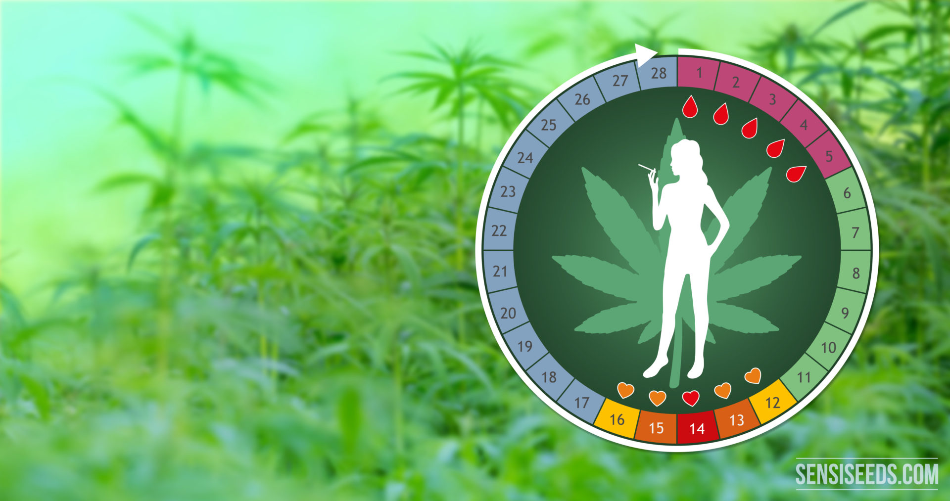 Top 5 ways cannabis can affect the menstrual cycle - Sensi