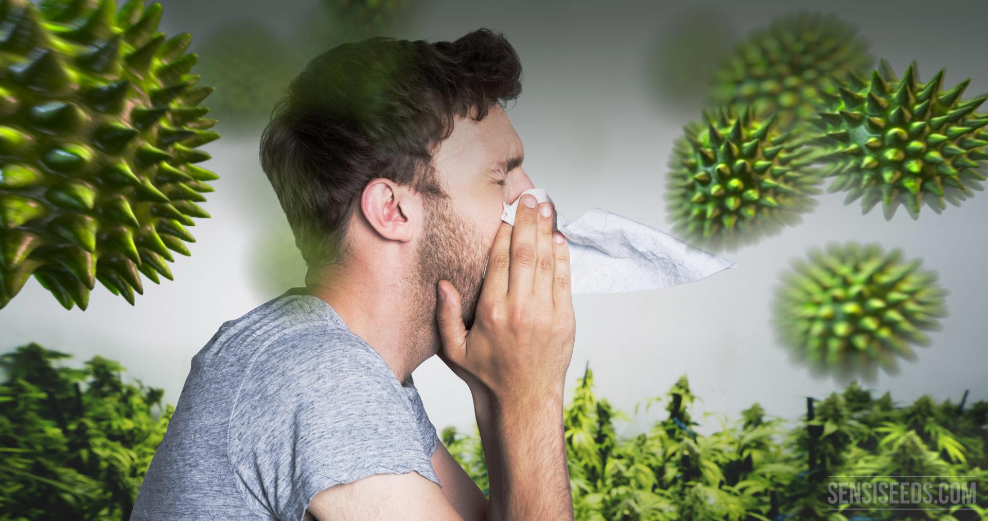 Allergie Planten Huid : De ultieme handleiding bij cannabisallergie