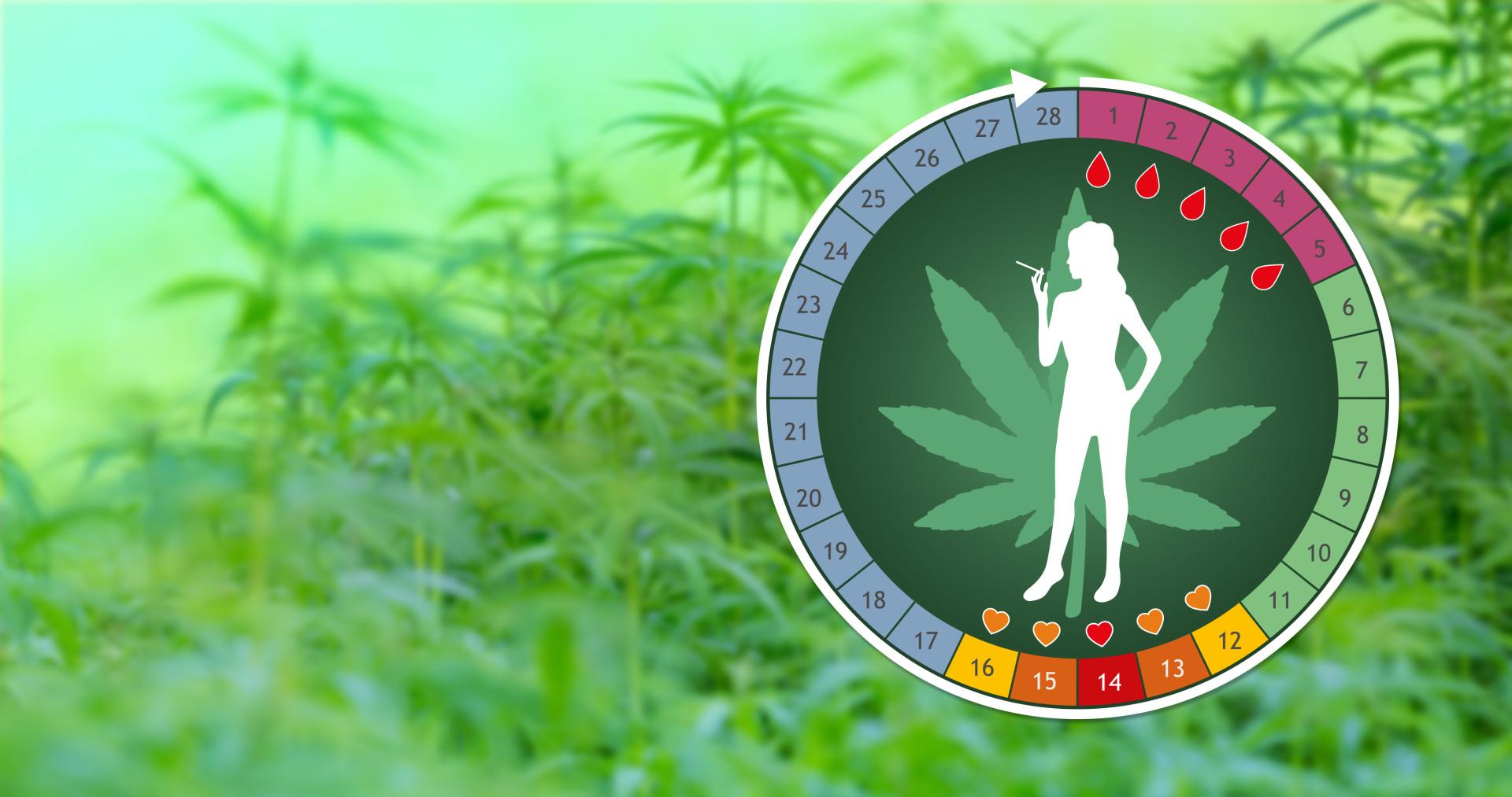 Cannabis and menstrual cycle Sensi Seeds blog 1920x1013 - Cannabis Can Affect The Menstrual Cycle!