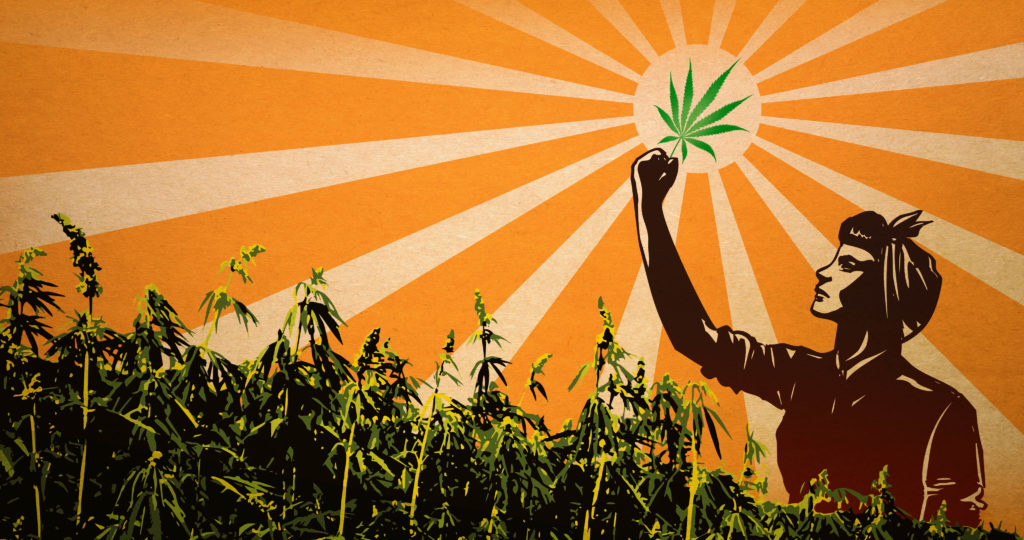 Hemp_revolution-sensiseeds