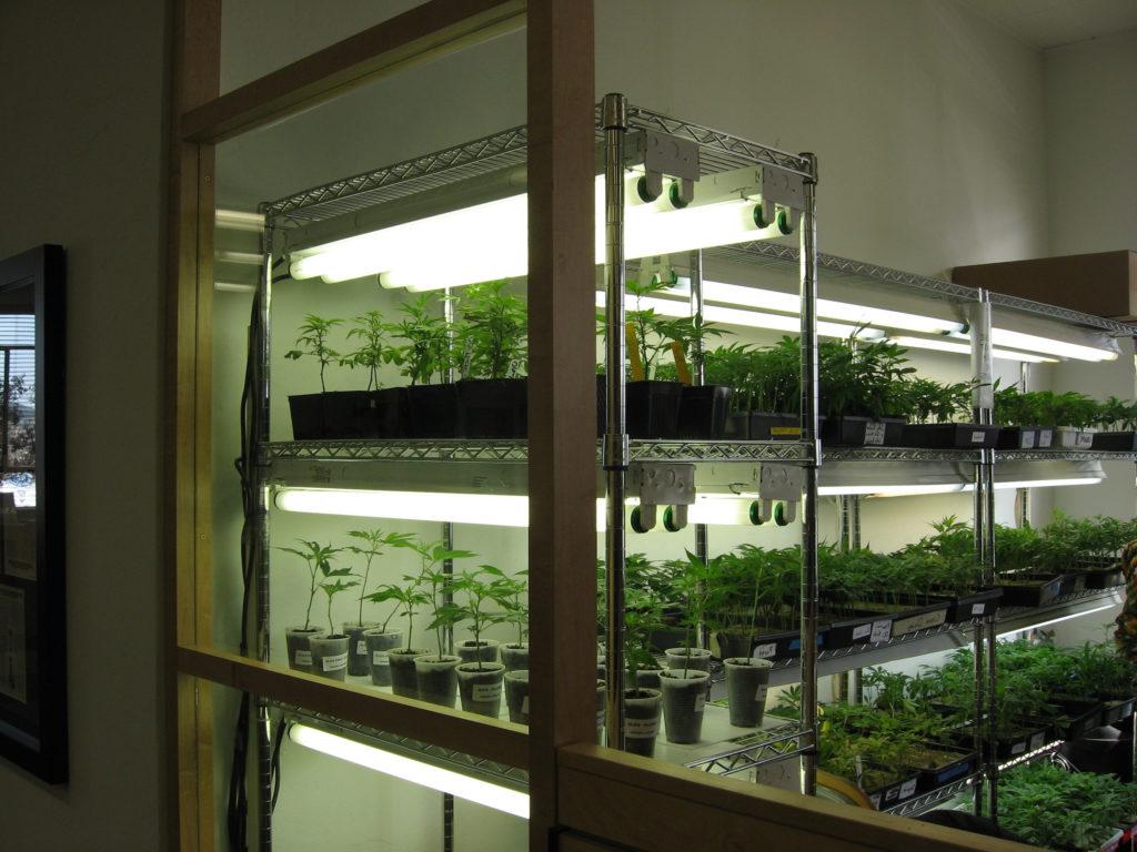Cómo montar un cuarto de cultivo de clones de calidad