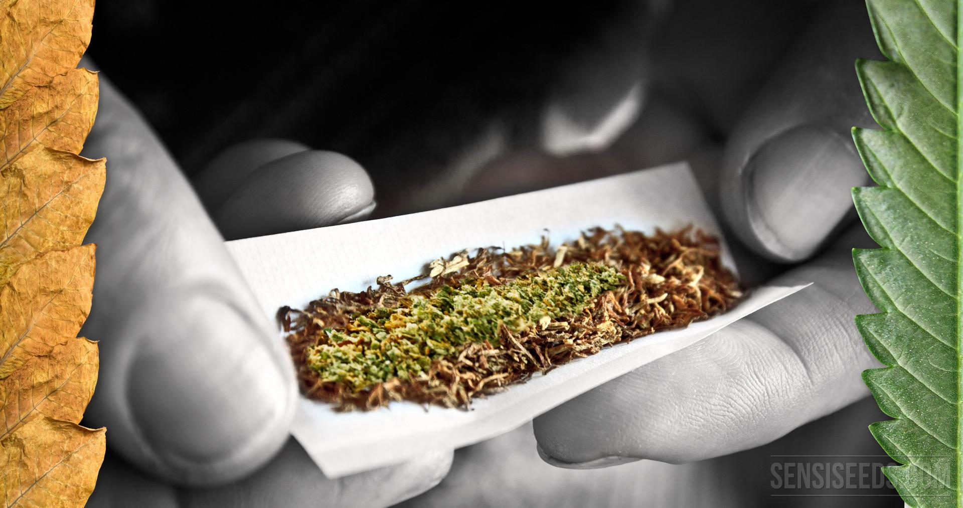 Как смешать табак с марихуаной игра в марихуану