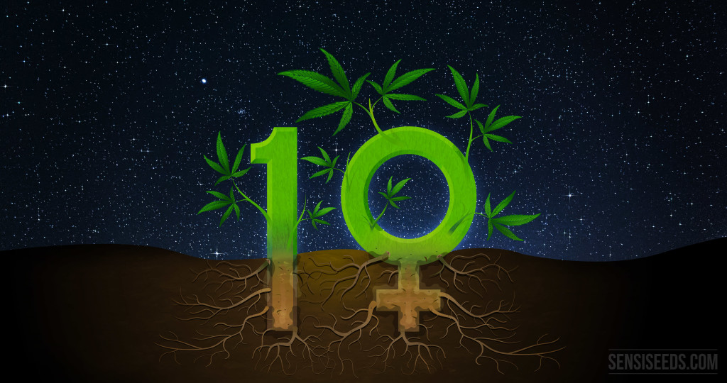 10 interesting facts about feminized seeds