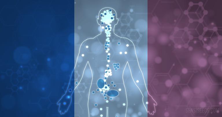 Les inhibiteurs euphoriques du système endocannabinoïde humain