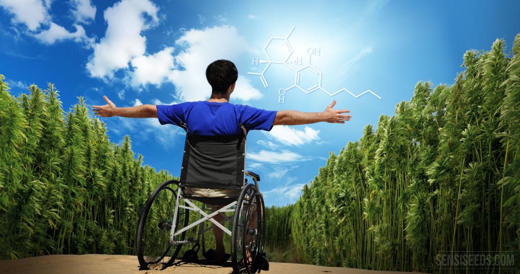 CBD – Ein Cannabinoid mit außerordentlichen Kräften - Sensi Seeds blog