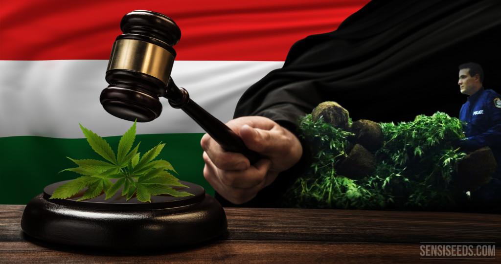 Cannabis in Hungary - Sensi Seeds Blog