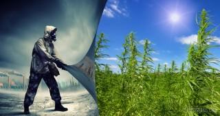 Is hemp the best biofuel?
