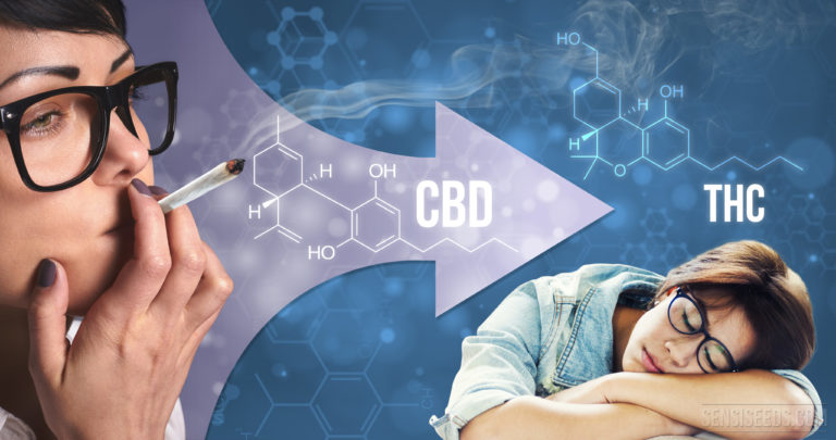 Can CBD counteract the effects of THC?