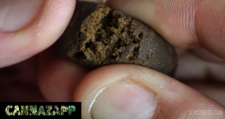 CannaZapp #10 – Cannabis: from Herb to Hashish
