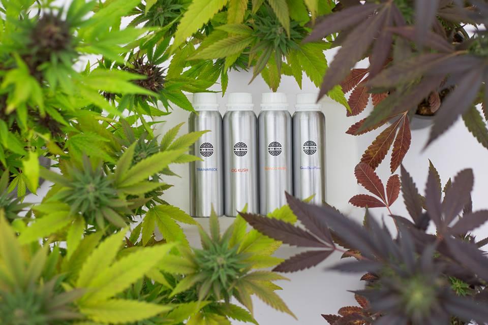 Eybna Technologies is een startup gericht op cannabisterpenen
