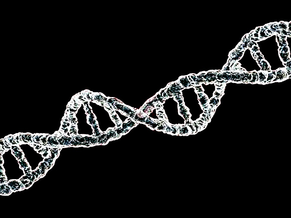 Secuencia de ADN (CC. Gabriel Andrés Trujillo Escobedo)