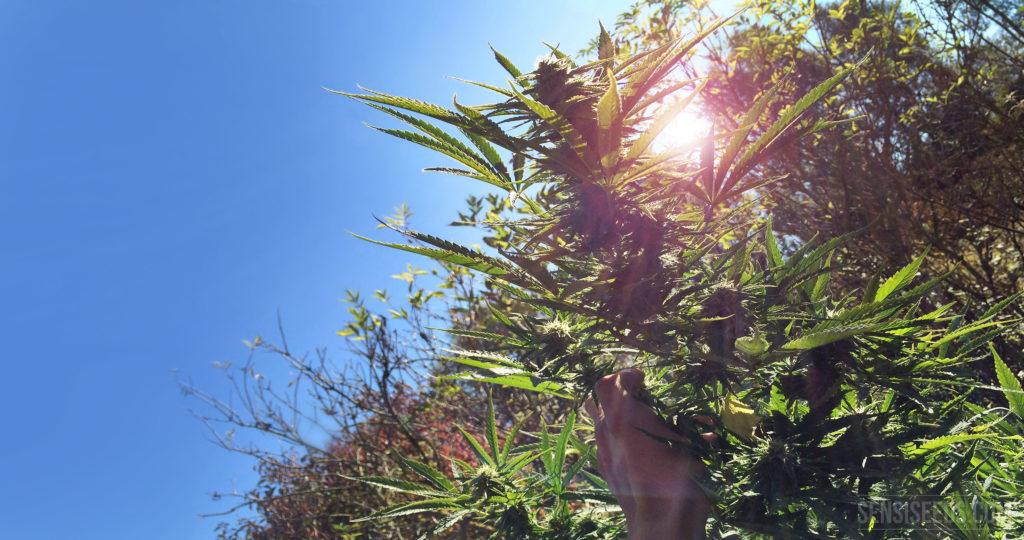 Willkommen Outdoor-Growing