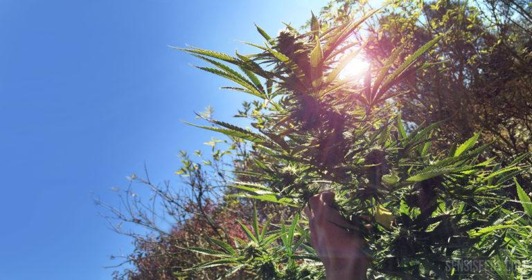 Best tips for outdoor growing