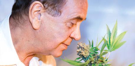Een man in een wit shirt ruiken een groene cannabisplant