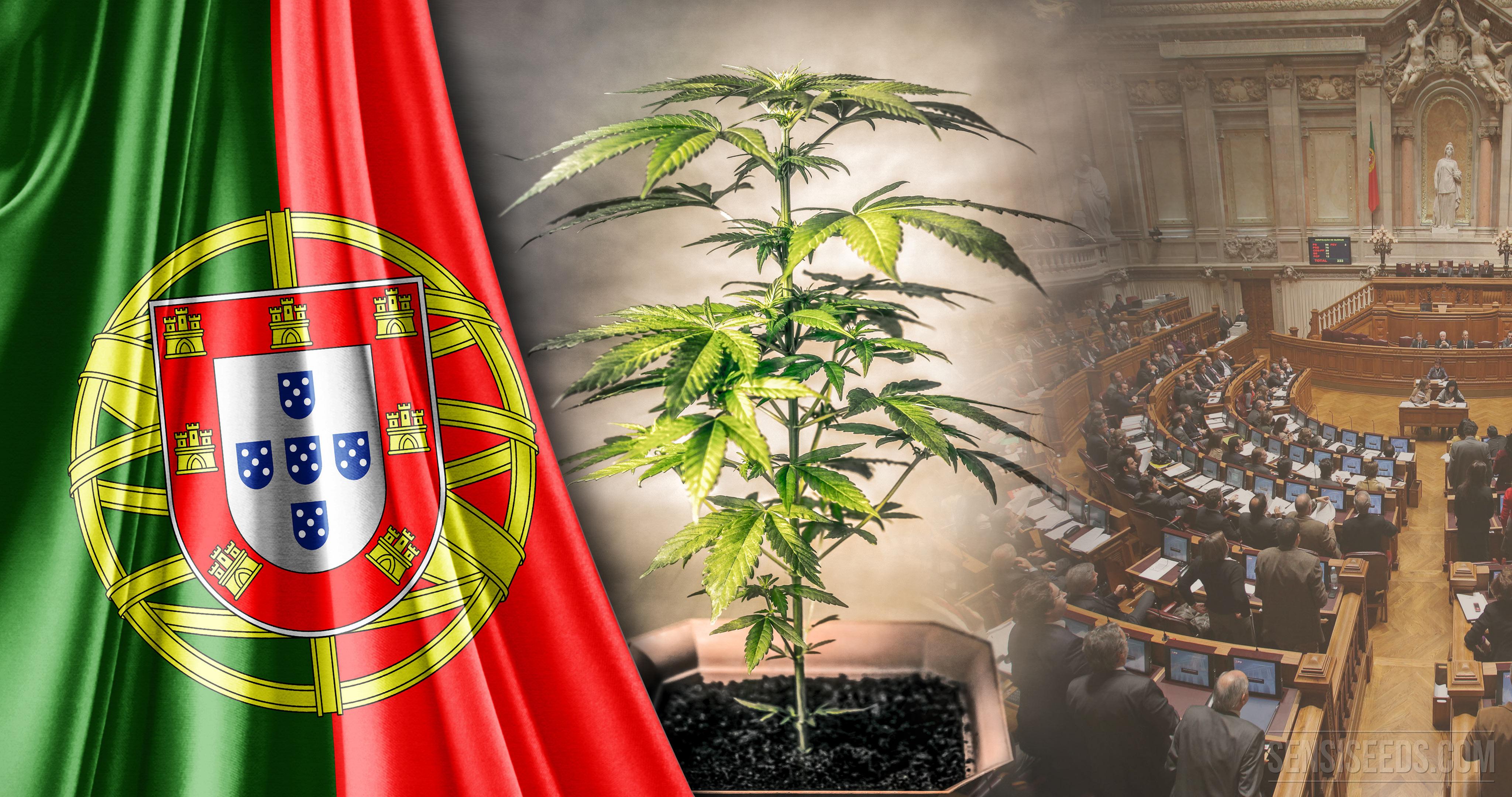 Resultado de imagen de Despenalización de las drogas en Portugal imágenes