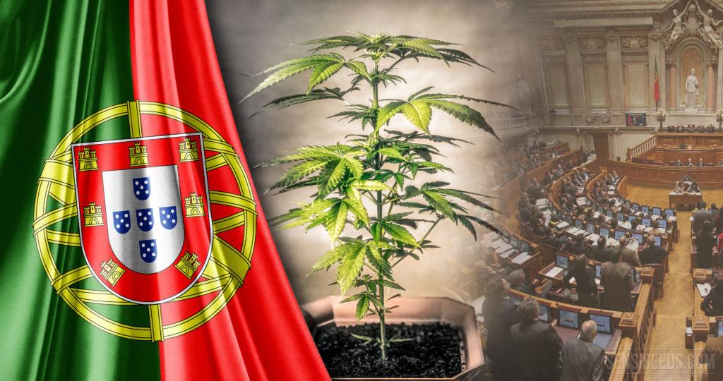 Le statut juridique du cannabis au Portugal