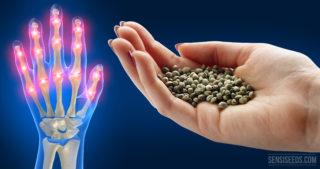 How I Accidentally Alleviated my Arthritis with Hempseed