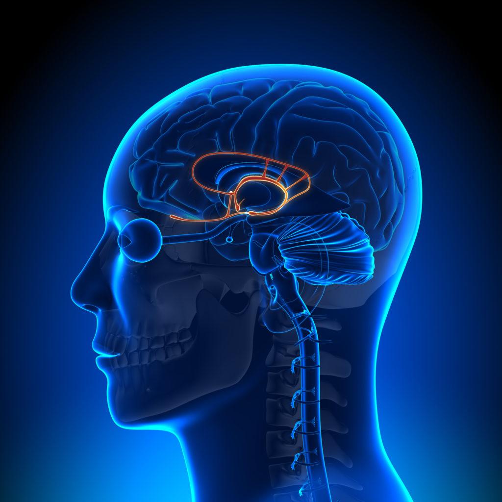 Le THC se lie aux récepteurs CB₁ situés dans le cerveau, causant un effet psychoactif (© Birth Into Being)
