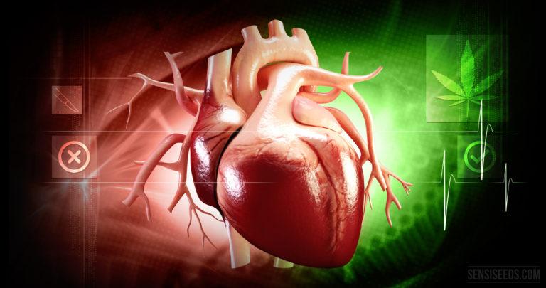 Le THC peut prévenir le rejet d'organes transplantés