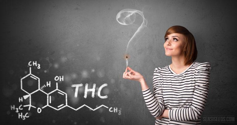 Science des cannabinoïdes 101 : qu'est-ce que le THC ?