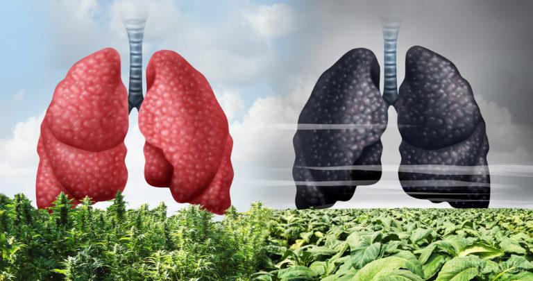 Le cannabis est moins nocif que le tabac : nouvelle