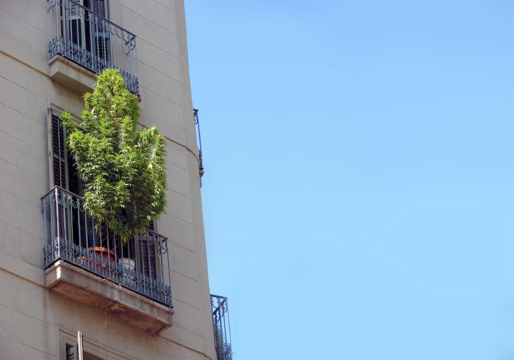 03-Top_5_legal_cannabis_destinations_Barcelona