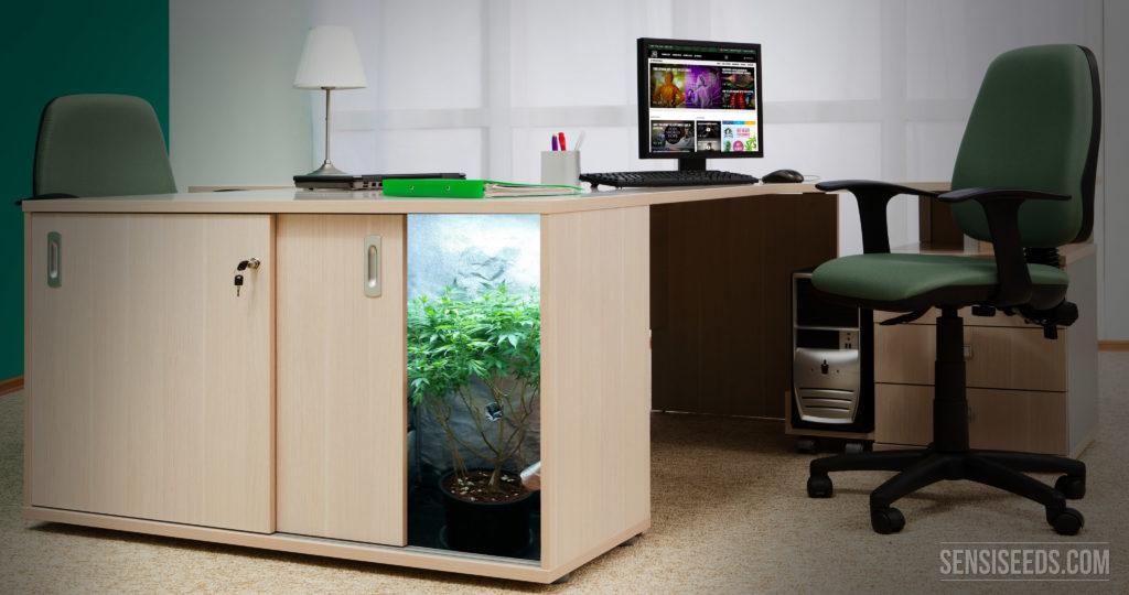 la diferencia entre cultivo de interior y micro cultivo. Black Bedroom Furniture Sets. Home Design Ideas