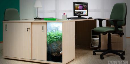 Een kantoor met een tafel, stoel, laptop en kast met cannabisplant