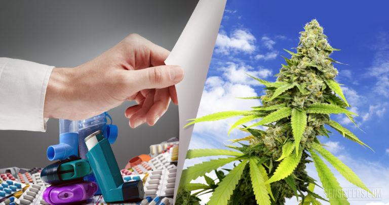 Cannabis et asthme : Conseils et mises en garde d'un patient