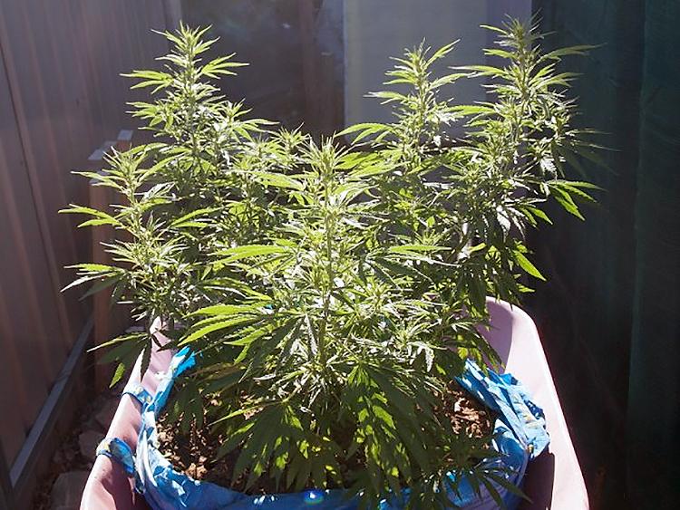 Endroits inhabituels pour cultiver le cannabis l ext rieur for Cultiver cannabis exterieur