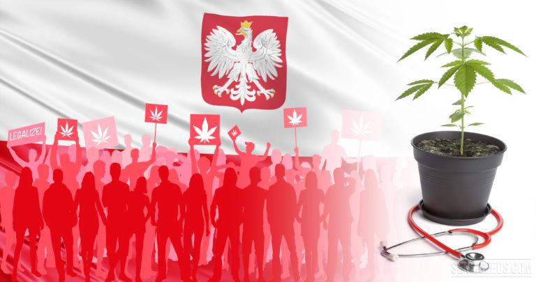 Le statut juridique du cannabis en Pologne – un aperçu