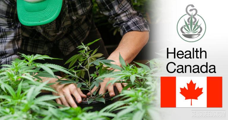 Les patients Canadiens pourront cultiver leur propre cannabis !