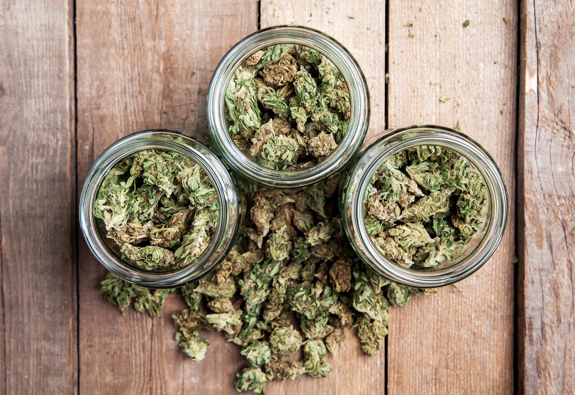 cannabis ernte die wichtigsten schritte zum sicheren erfolg. Black Bedroom Furniture Sets. Home Design Ideas