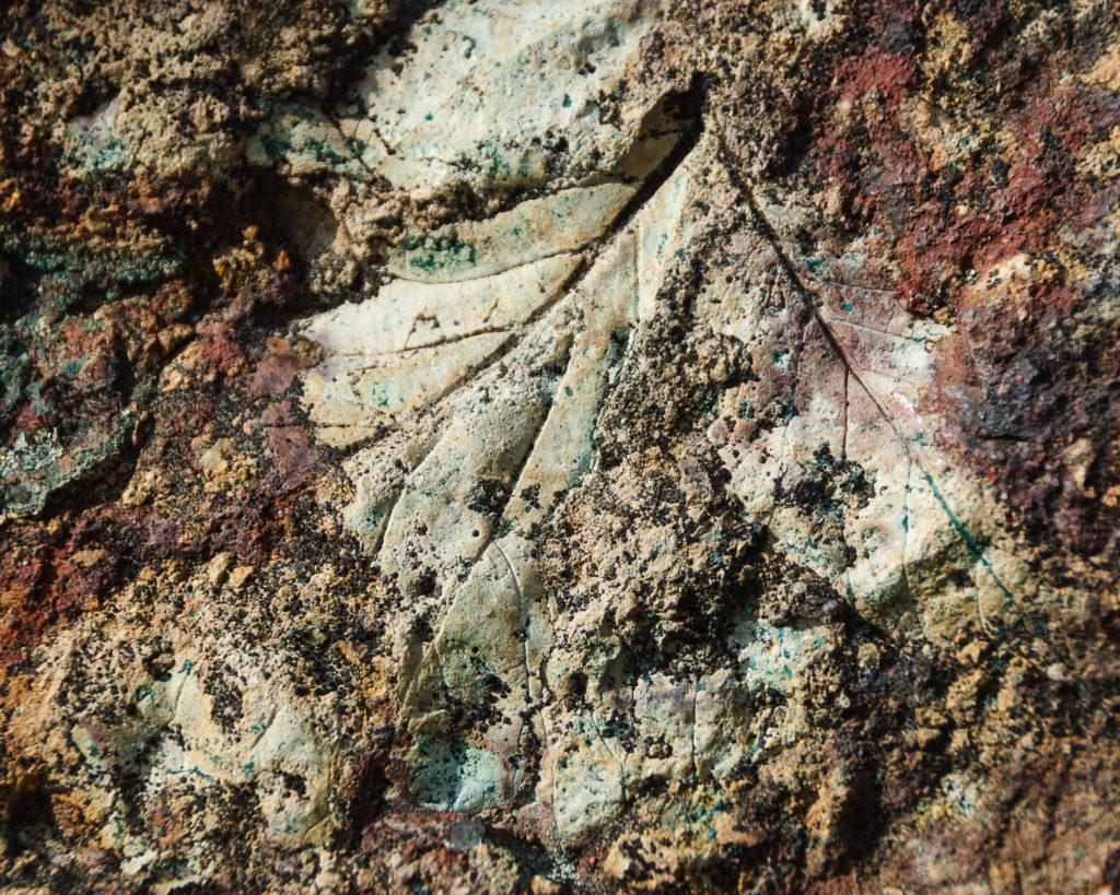 Er zijn nauwelijks fossielen van bladeren en zacht plantenweefsel te vinden (© lorenkerns)