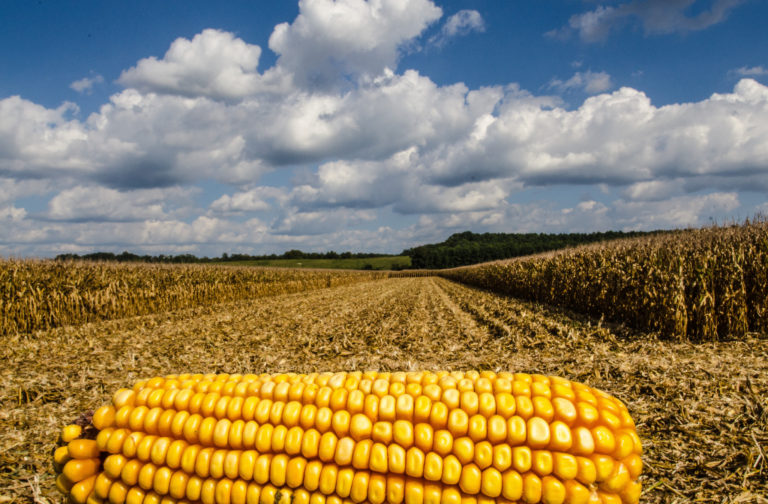 global expansion in brazil corn farming