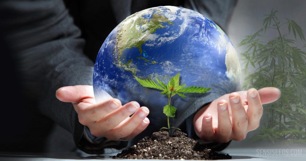 ¡Es Hora de Pensar Globalmente y Cultivar Localmente! - Sensi Seeds Blog