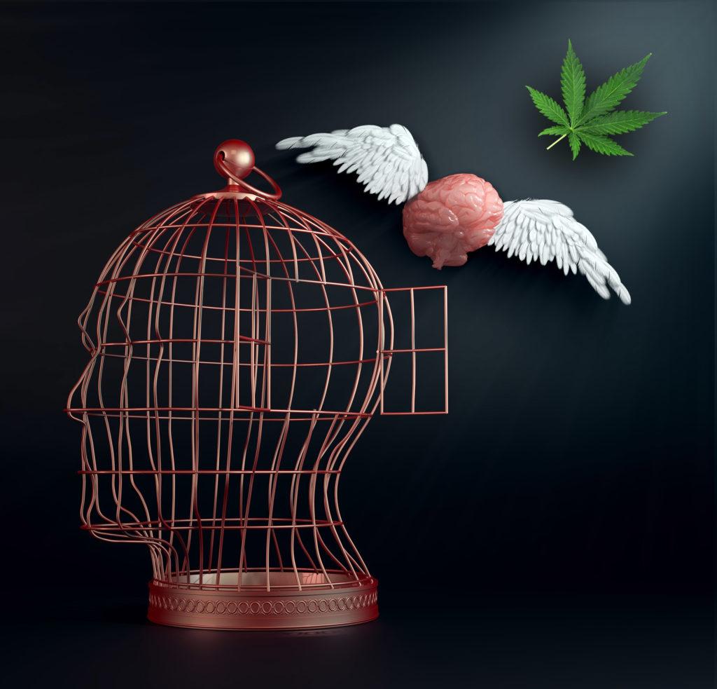 Waarom worden cannabisgebruikers vegetariërs?