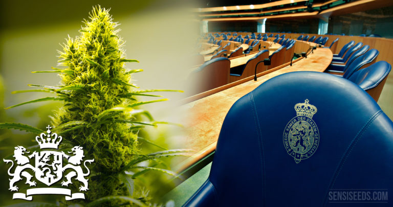 Dutch Parliament submits bill to regulate cannabis cultivation