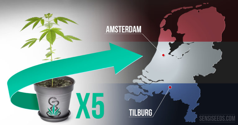 Newsflash: Medicinal cannabis growing permitted in Tilburg, Netherlands