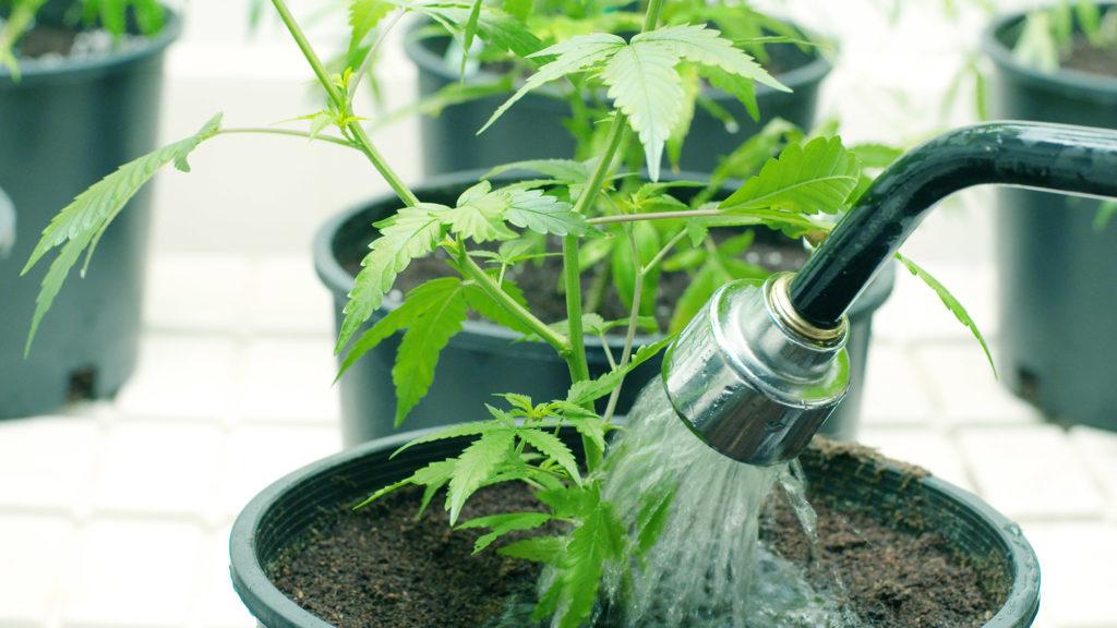 So bauen Sie eine gute Basic-Indoor-Grow-Anlage - Sensi Seeds Blog