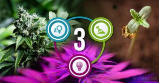 Three Ways To Make Your Growroom Greener
