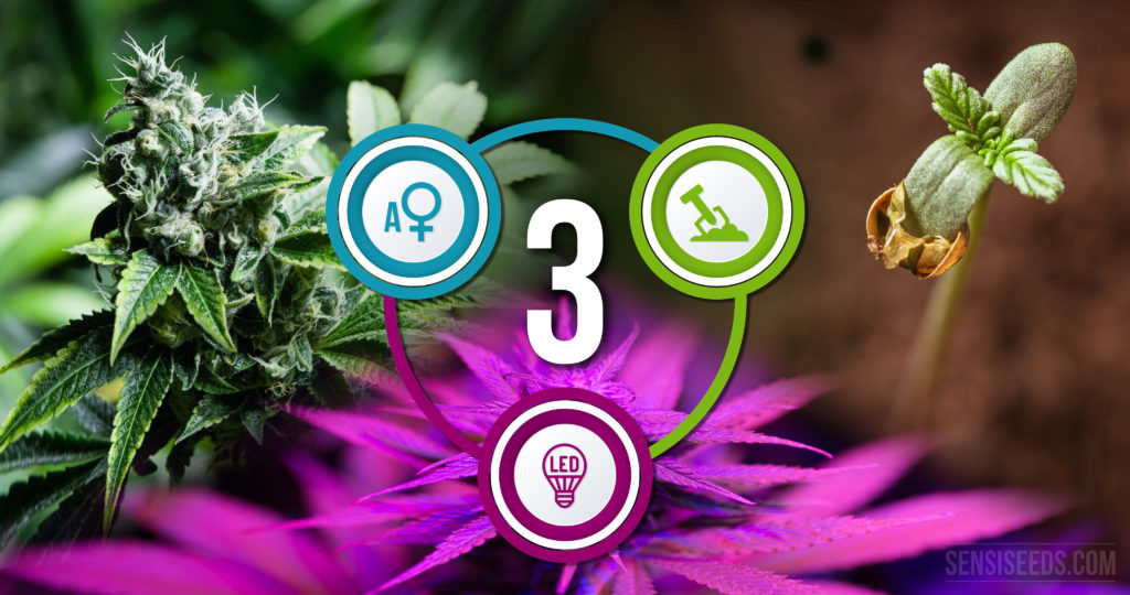 three-ways-to-make-your-grow-room-greener-4k
